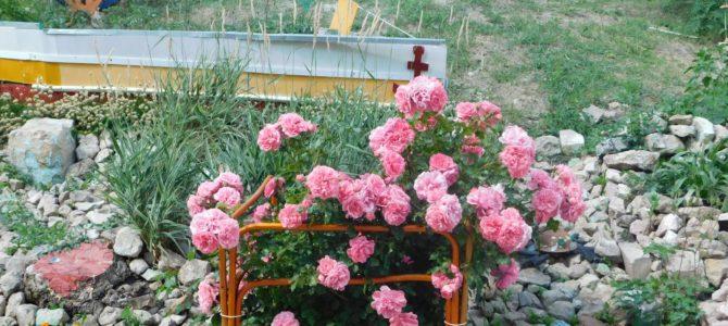 Сергиевск в цвету